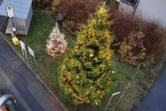 Baum-von-oben